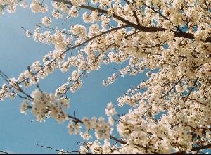 Alergias al polen: ¿cómo protegerse contra ellas?