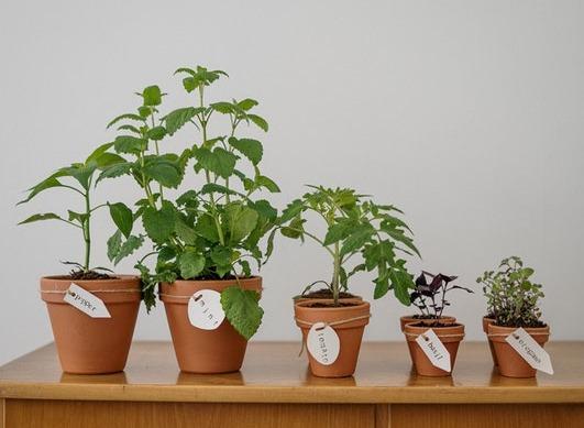 ¿Qué plantas utilizar para aliviar los dolores articulares y musculares?