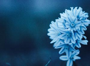 Síntomas, tratamientos, esperanza: los tumores neuroendocrinos y yo