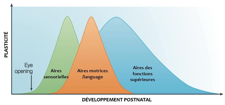 desarrollo después del nacimiento