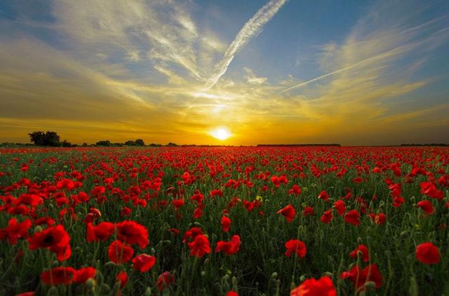 sunset-field-poppy-sun-priro